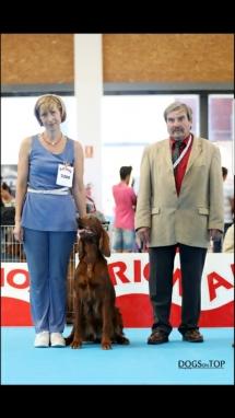 Exposicion_internacional_canina_talavera16