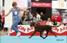 Exposicion_internacional_canina_talavera19