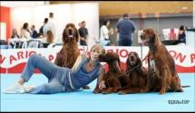 Exposicion_internacional_canina_talavera4