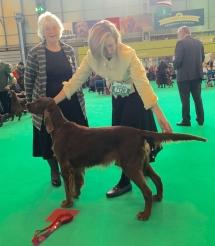 Greta_ganador_crufts_2016_setter Irlandes-3